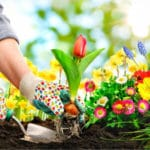 How To Solve Common Gardening Problems