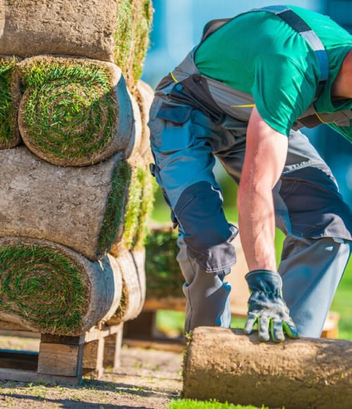 Article: How to Get Rid of Crabgrass for Good